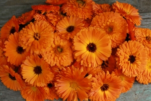 pomaranczowe nagietki